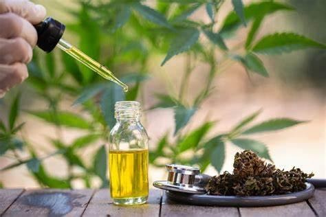 Facts About CBD Oil For Cats And Dogs