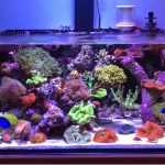 Nano Reef