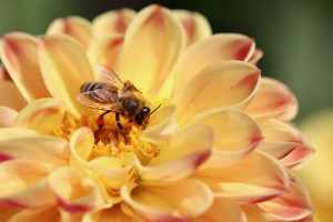 is honey good for you