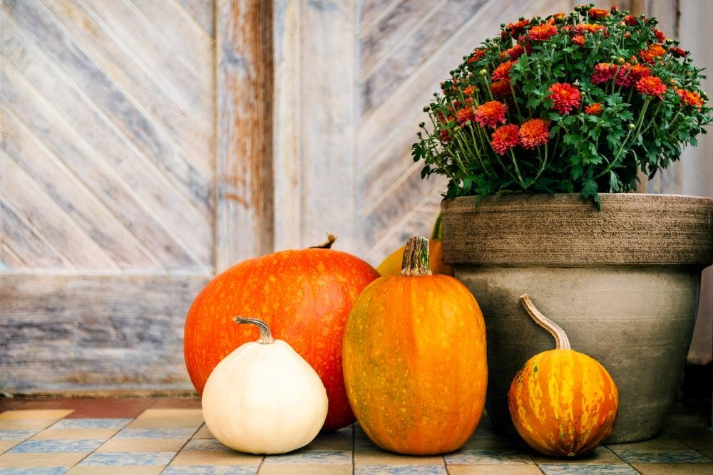 Arrange assorted pumpkins