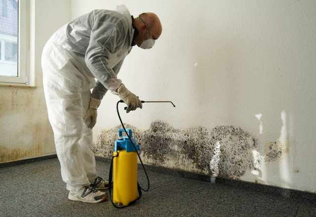 consider mold inspection before purchasing a house