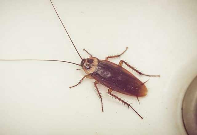 remove cockroaches